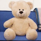 Sherman Teddy Bear B3xxxb21